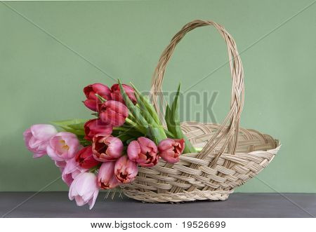 lots of tulips in a basket - green background