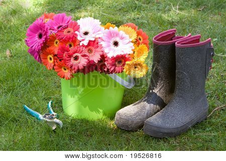 colorful daisies in a bucket, boots, & secateurs - yard work