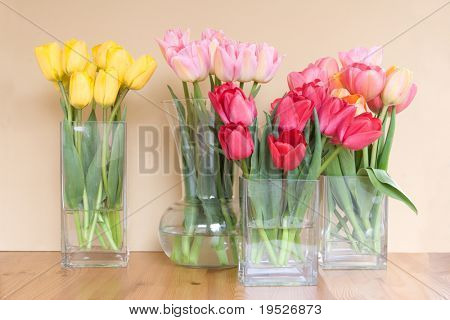 lots of vases of colorful tulips sit on table - taupe background