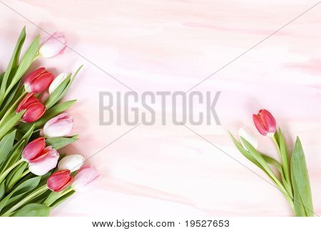 red and pink tulips on pastel watercolor background for spring