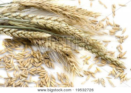 Wheat ears isolated on cereal background
