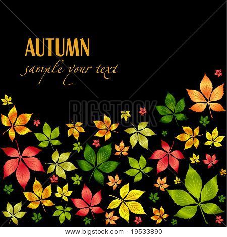 Set of vector colorful autumn leafs .Autumn background