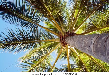 High Rising Palm Tree