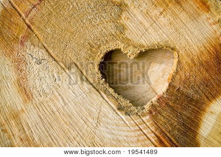Cut log wood background texture.