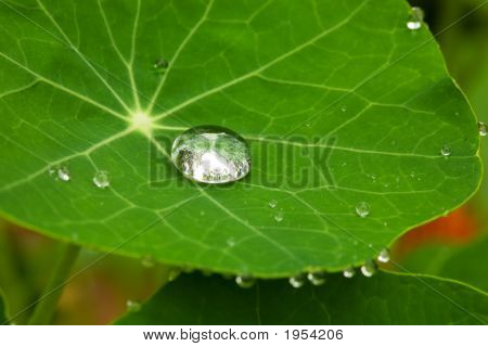 Drop On A Leaf (Macro)