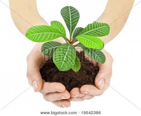 Plant in a hand isolated on white background