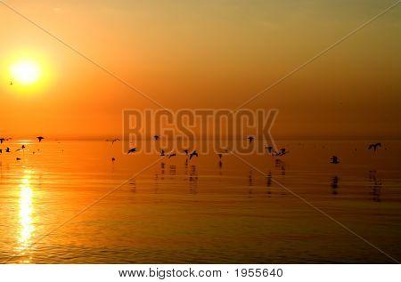 Birds Above Orange Sea