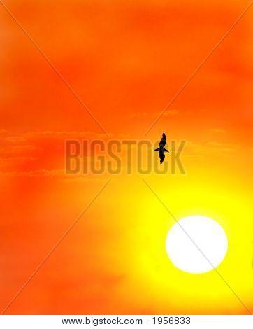 Seagull Against A Setting Sun