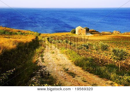 Old road leading to small house on a vineyard by the sea