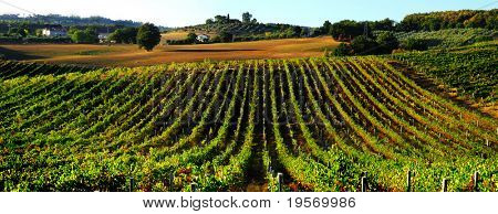 Beautiful countryside vineyard panorama north of Rome in Italy