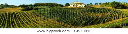 Panoramic shot of an Italian vineyard in rolling countryside north of Rome, Italy