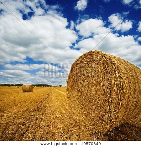 Amazing Golden Hay Bales on a perfect sunny day