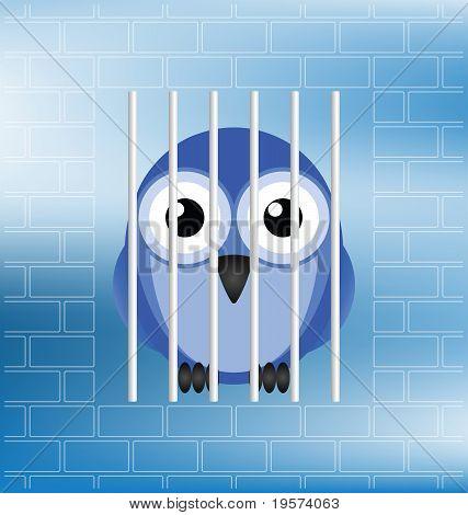 Bird jailbird