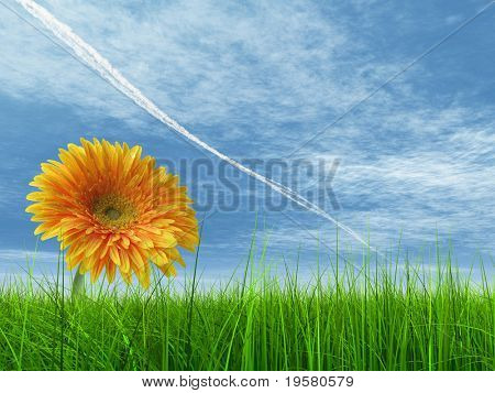 high resolution 3d green grass over a blue sky with white clouds and plane trace or trail as background and a nice yellow gerbera flower at horizon. Ideal for nature,green or sport designs.