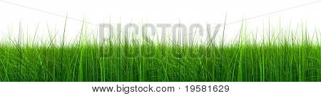 3d green grass rendered at maximum quality isolated on white background, ideal for nature,environment,sport or health designs
