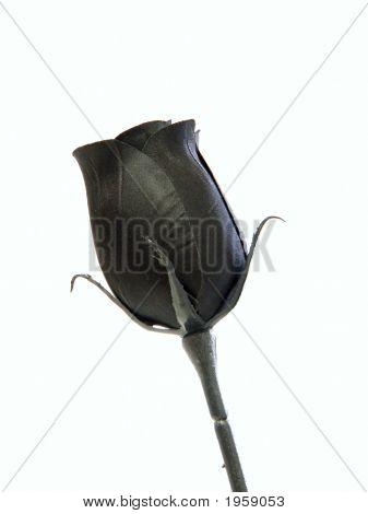 Fake Black Rose