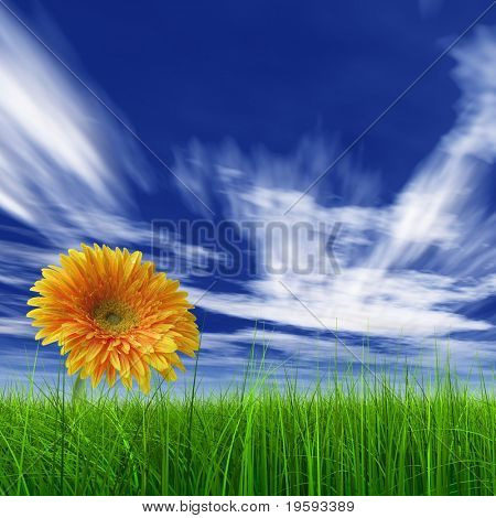 High resolution yellow flower in grass with a blue sky background