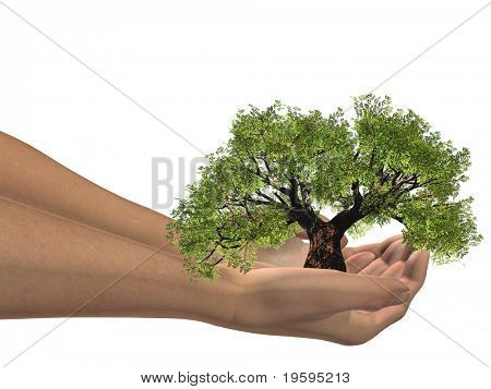 High resolution conceptual green tree held in hands isolated on white