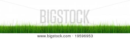 High resolution green grass isolated on a white background