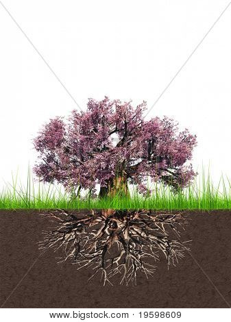 High resolution conceptual old baobab tree with a root
