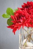 stock photo of vase flowers  - red dahlia flowers in a vase - JPG