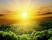 Постер, плакат: Солнечный свет в деревьями леса зеленых летних
