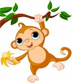 pic of baby-monkey  - Cute baby monkey on a tree holding banana - JPG