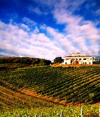 Italian vineyard at sunset with Italian villa on the hill