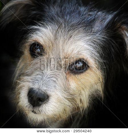 look hungry stray dog