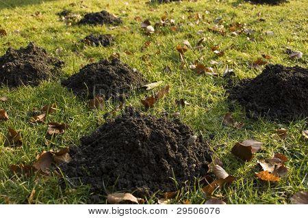 Lot of Molehills