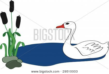Swan Near Reeds