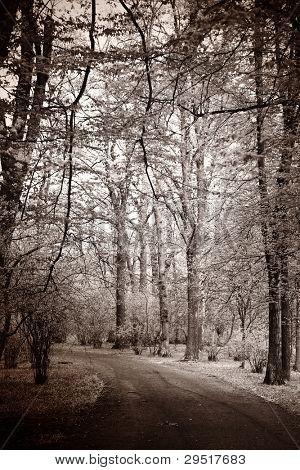 Melancholic landscape