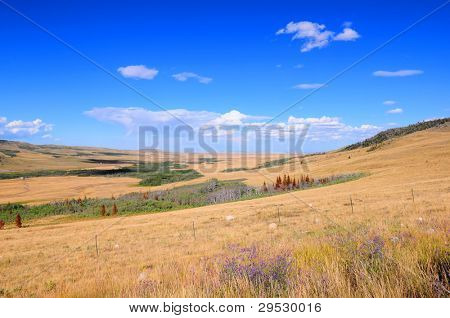 Montana landscape: prairie grass and blue sky