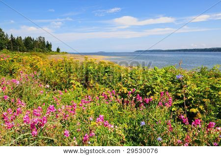 Wildflowers on Vancouver Island coast, Canada