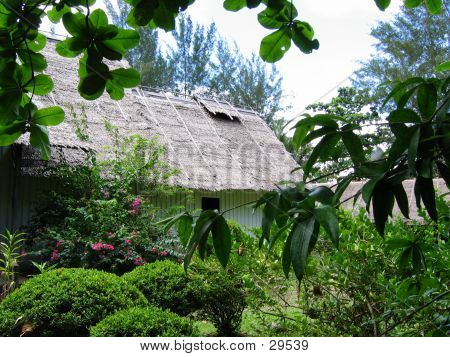 Tropical Thatched Roof