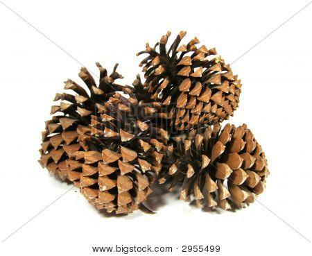 Some Big Cedar Cones