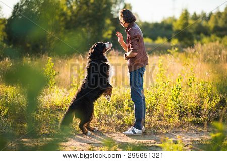 poster of Young Man Walking With Bernese Mountain Dog On The Summer Field