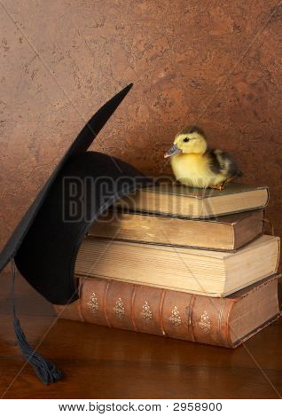 Easter Duck On Books
