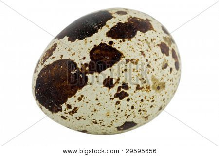 quail egg macro isolated on white