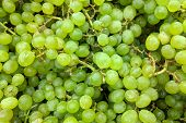 Green Grapes  Close Up,  Background. Fresh Grapes Variety Grown In The Shop. Grapes Suitable For Jui poster