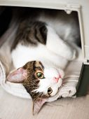 A Cat Looking Up, Animal Portrait. Cute Tabby Cat Sitting In A Travel Crate And Look Sideways poster