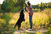 Young Man Walking With Bernese Mountain Dog On The Summer Field poster
