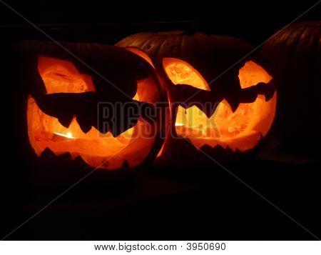 Siamese Pumpkin Glow