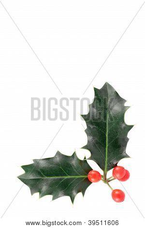 Christmas holly corner