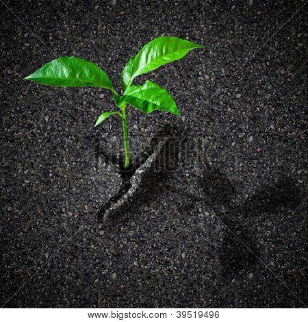 Sprout breaks asphalt concept