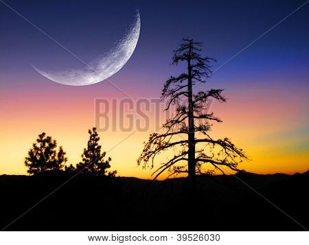 Sunset or sunrise with silhouette of pine trees with large crescent moon