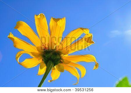 Flower raise up with the sun