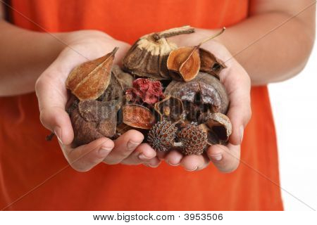 Handful Of Fragrant Potpourri