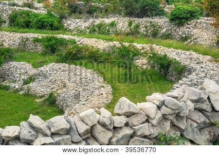Sheep pasture drystone walls Rudine Krk island Croatia