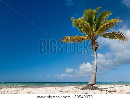 Panoramic photo of a palm tree on a tropical beach
